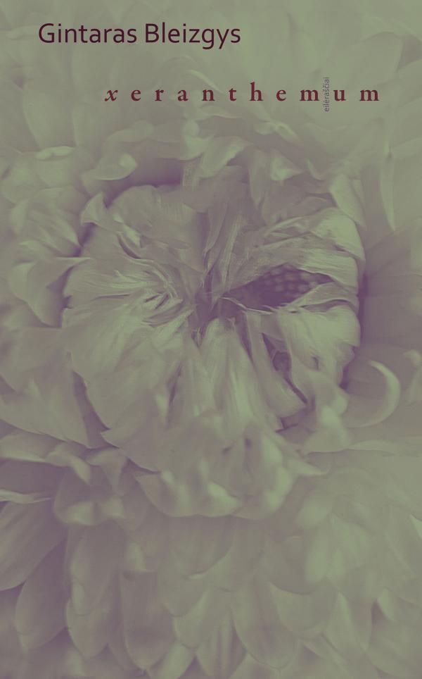 Xeranthemum | Gintaras Bleizgys